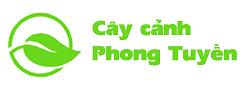 Cây Cảnh Phong Tuyền